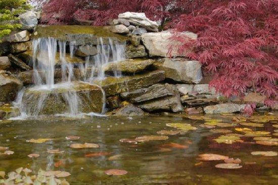 Jspuzzles puzzles en l nea garden pond for Garden pool crossword