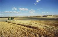 Barley harvest in Washingtons Palouse Hills