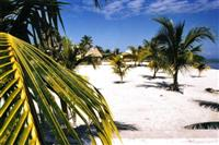 Palm trees and a beach, Belize