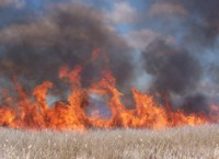 Marsh burn at Tule Lake National Wildlife Refuge 2005.