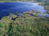 Wetland habitat at Okefenokee National Wildlife Refuge