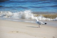 A seagull on the beach