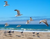 Seagulls flying over a beach