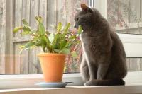 A Cat and a plant