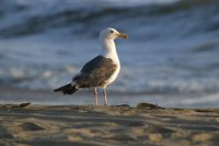 A bird on the beach