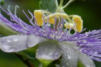 A Flower and Raindrops