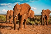 African Elephants Against a Blue Sky
