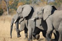 Elephant Family at Hwange National Park, Zimbabwe
