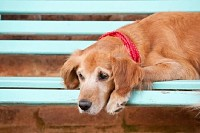 Dog Resting on a Bench