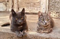 Two Cats Near an Abandoned House