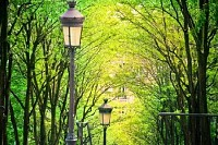 Trees in Montmartre, Paris, France