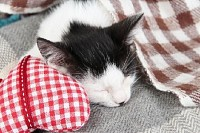 Sleeping Kitten on Blanket