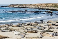 Elephant-Seal Colony