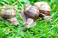 Snails on Green Grass