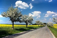 Springtime View of Road