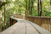Pedestrian Bridge in New Zealand Forest
