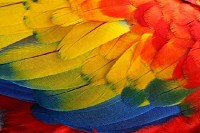 Colorful Parrot Wings