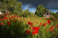 Storm Clouds over Poppies