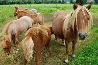 Group of Ponies
