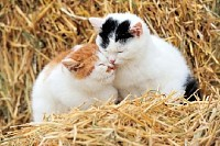 Cats on Straw
