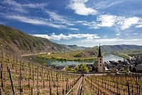 Vineyards at the Winding Mosel River near Bremm, Germany