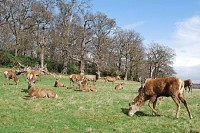 Herd of Stags