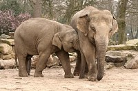 Two Elephants Hugging