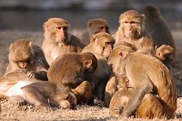 Monkey Family in the Sun