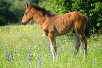 A Beautiful Foal
