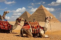 Pyramids and Camels, Egypt