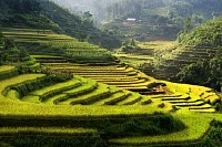 Rice Fields, Mu Cang Chai, Vietnam