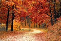 Autumn Fall Path Forest