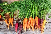 Lively Carrots