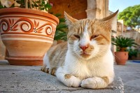 Lazy Cat from Crete
