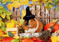Guinea Pig in Autumn