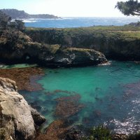 Tide Pool-Point Lobos State Reserve