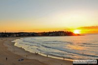 Morning Gold - Bondi