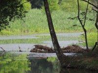Water Scenes