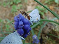 Butterflies and Wasp