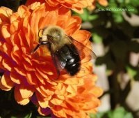 Mum and Bumble Bee