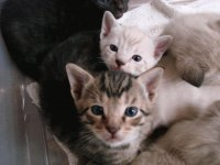 Kitten Cuties