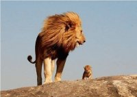 majestic and  son
