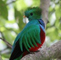 aves y flores hermosas