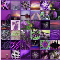 Everything Purple Collage