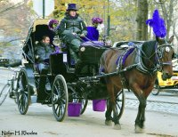 Horse Drawn Carriage Ride-Central Park NYC