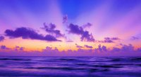 Purple Dawn