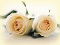 Flores y rosas