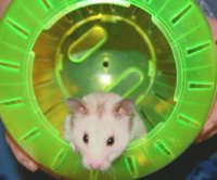 my hammy Mysty R.I.P.