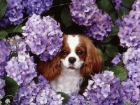 Dog in the Purple Flowers