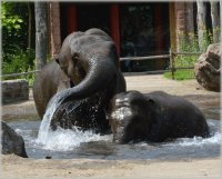 Elephants in the Pool